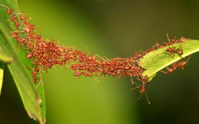 swarm-intelligence-ants